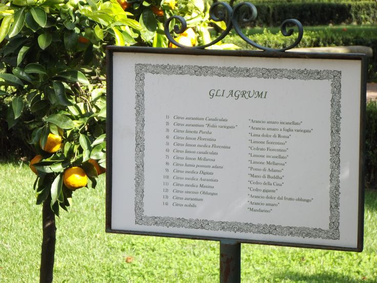 "The ""agrumi"",citrus trees in Italian;Healing properties of Italian oranges as listed on a banner placed inside one of the most known Italian botanical garden,http://erbeitalianskincare.blogspot.it/2013/04/vitamin-c-combats-irregular.html"