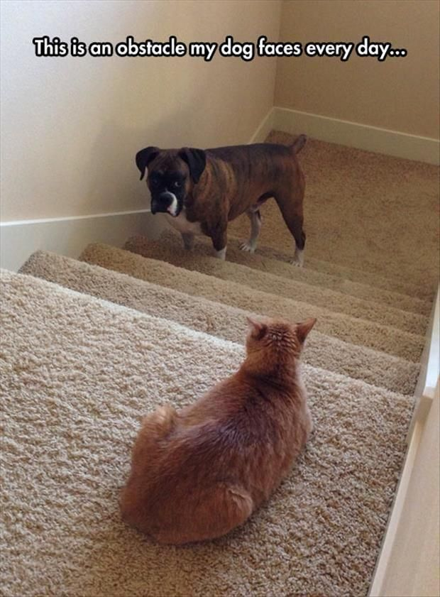 """The dog wants to go up stairs, but the cat looks at him to say """"I double dare you"""""""
