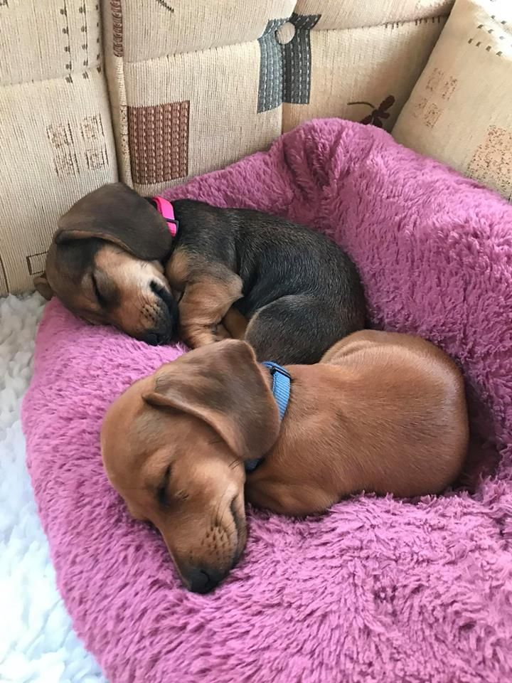 Florence And Willow Fast Asleep In Our Caravan