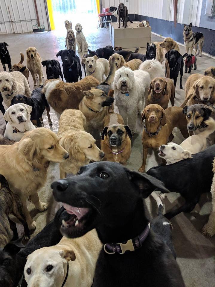 Group Selfie At Dog Daycare Goes Viral Dog Daycare Dog Selfie