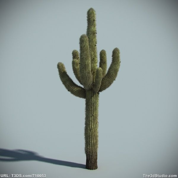 Royalty free 3d computer model saguaro cactus available 3d model sites