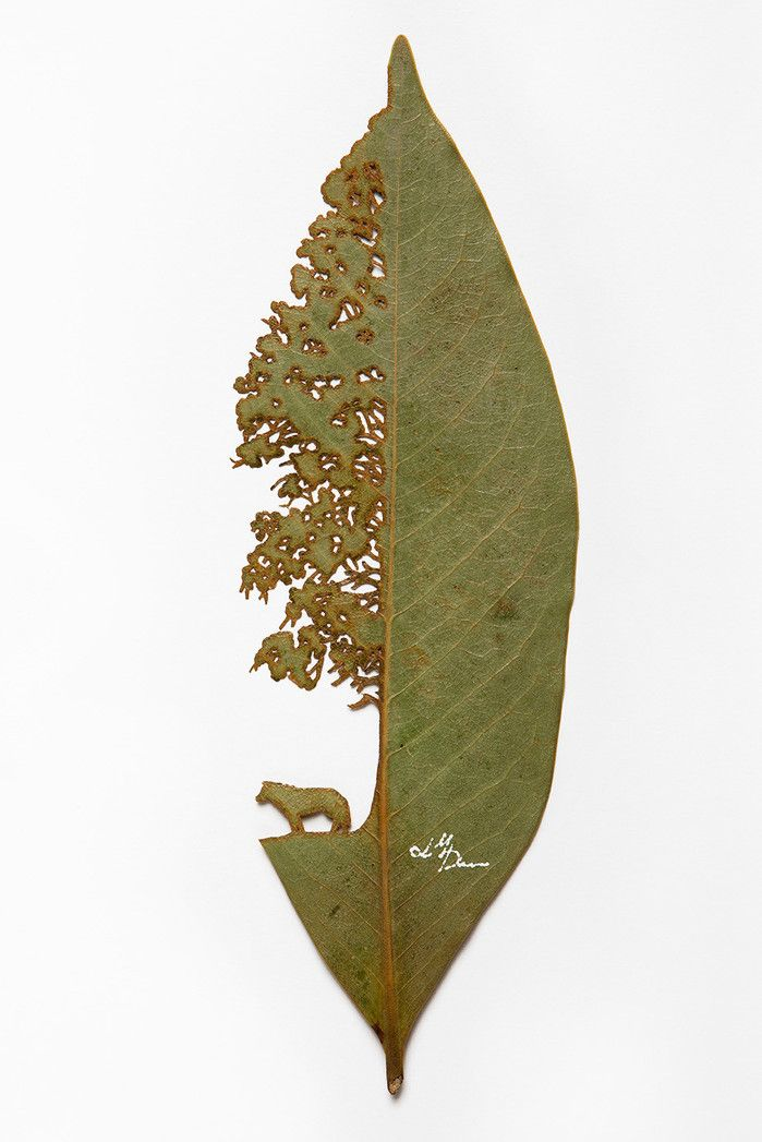 ''Leaf art and nature'' The work of Lorenzo M. Duran.