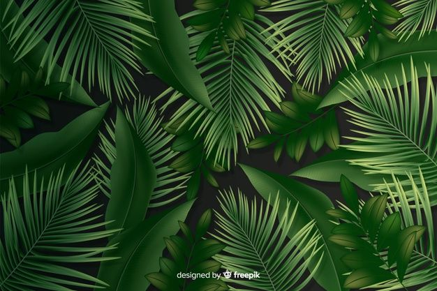 Download Natural Background With Realistic Leaves For Free Vetores Free Folhas Tropicais Vetores