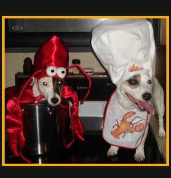 12 Crazy Cute Dog Halloween Costumes