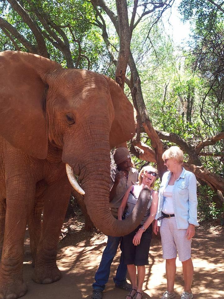 Hartebeesport Elephant Sanctuary