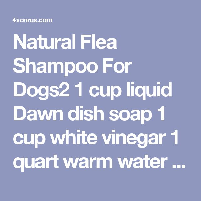 Natural Flea Shampoo For Dogs2 1 cup liquid Dawn dish soap 1 cup white vinegar 1 quart warm water Directions Mix the three ingredients in a large bowl. Transfer to a leftover squeeze bottle (like an old shampoo bottle). Give it a little shake to make sure it is mixed. Apply to your doggy just as you would normal shampoo. It is best if you can massage it into the fur and let sit for 5 minutes. Rinse your doggy thoroughly with warm water. Towel dry.