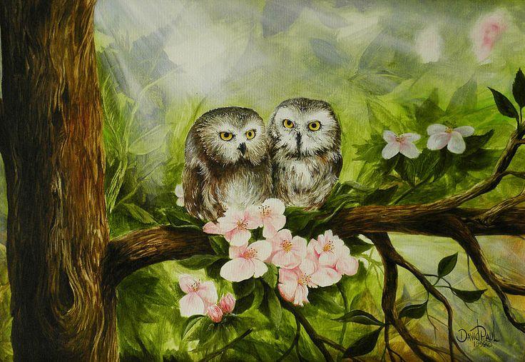 'Baby Owls' by David Paul