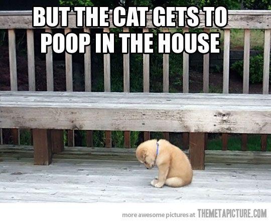 Haha little poop