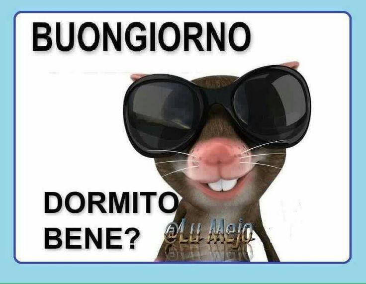 Buongiorno frasi divertenti pinterest for Buongiorno sms divertenti