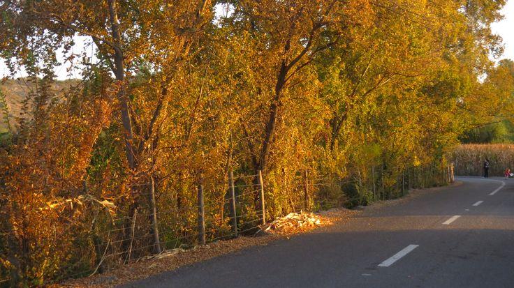 Camino al Sapal
