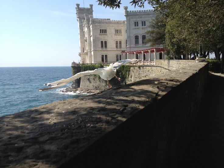 Miramare Trieste Italy