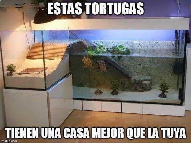 Imagenes de Humor #memes #chistes #chistesmalos #imagenesgraciosas #humor www.megamemeces.c... → http://www.diverint.com/memes-risa-descargar-todavia-le-hablas