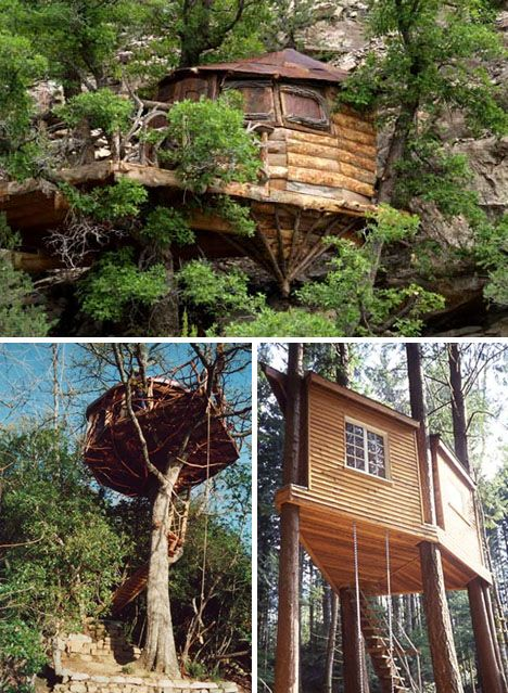 Exotic Tree Houses: Cliff Treehouse, Trees Houses, Exotic Trees, Tree Houses, Houses Ideas, Organizations Trees, Trees Home, Forests Organizations, Treehouse Ideas