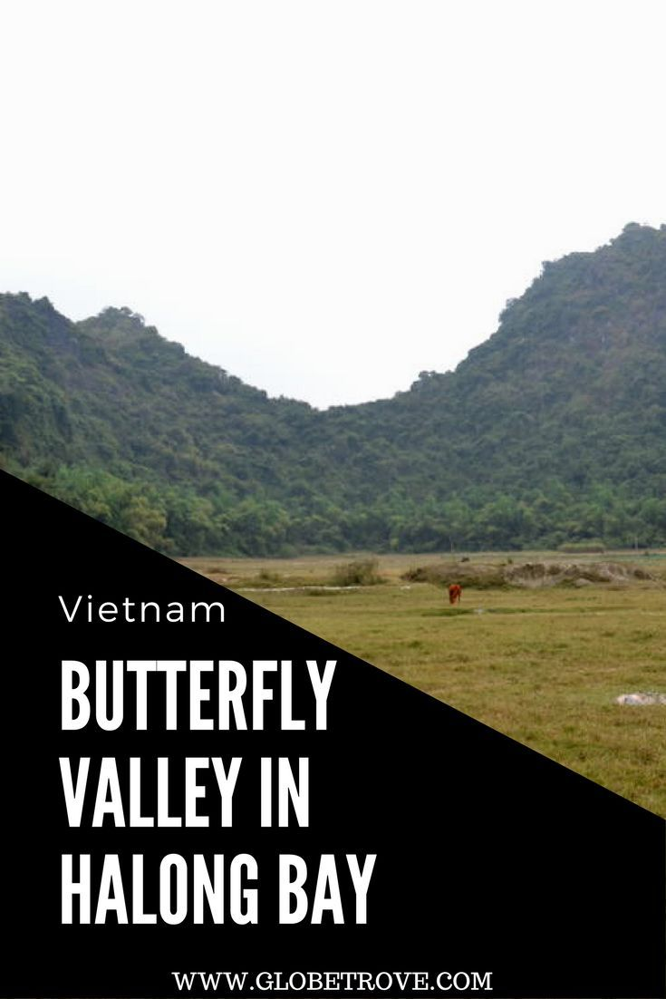 The butterfly valley in Cat Ba Vietnam wasn't our greatest idea. It was a great drive and a great way to pass a day in Halong Bay without boarding a boat.