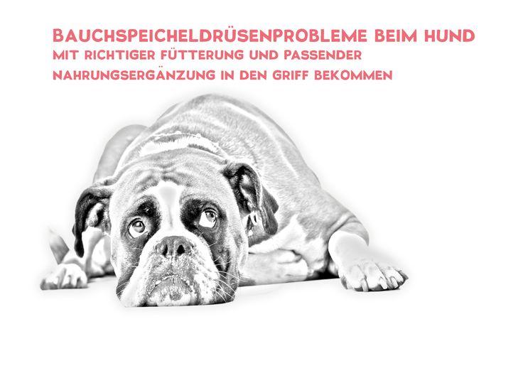 Webinar zum Thema Bauchspeicheldrüsenprobleme beim Hund