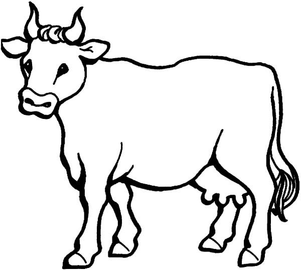 Cows Cows Coloring Pages For Kids Cow Coloring Pages Animal Coloring Pages Cow Cartoon Drawing