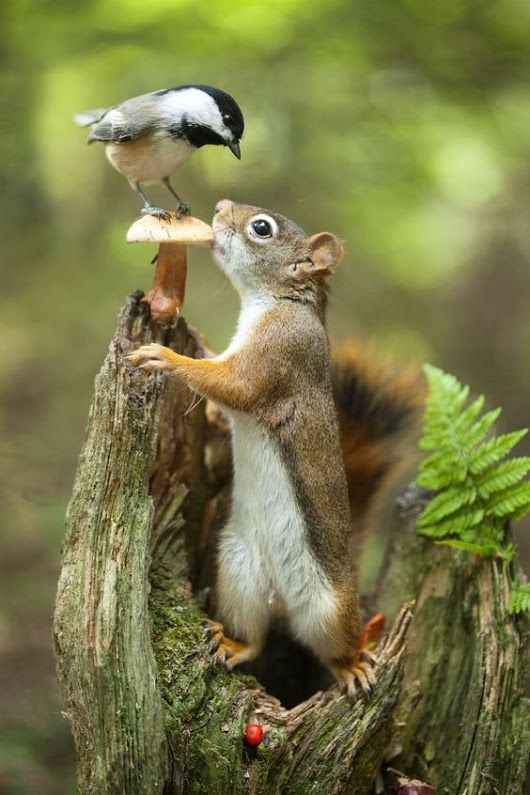 Best Chipmunks Ideas On Pinterest Squirrel Food What Does - Cat squirrel playing cutest thing youll see day