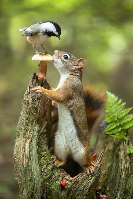 Chickadee & Squirrel