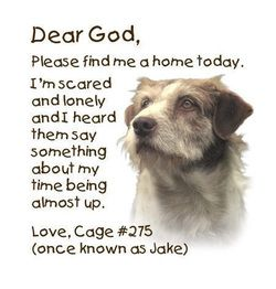 """Last Day Dog Rescue, I wish they all could find good loving homes; and I wish no one would ever say """"I just don't have time for him/her anymore"""".  Dogs are not disposable."""
