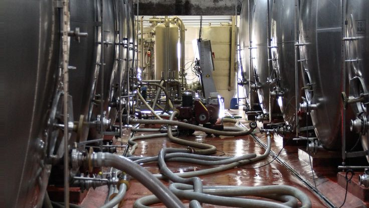Winemaking in Process