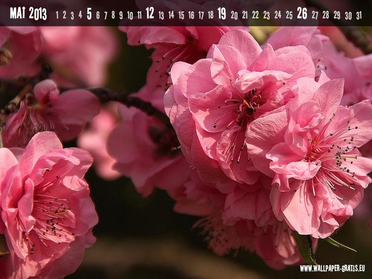 Kalenderblatt mit japanischer Kirschblüte für Mai 2013