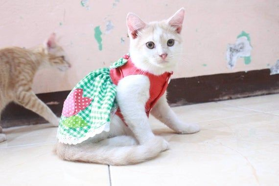Dress With Flower Rose For Cat And Small Dog Persian Cat Etsy Cat Clothes Cats Sphynx Cat