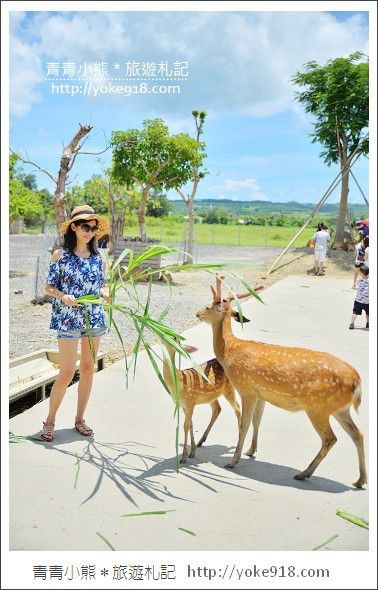 屏東景點,墾丁必玩景點,鹿境生態梅花鹿園,墾丁親子同遊的好去處,推薦大家來墾丁一定要來這玩,來到鹿境可以與小鹿近距離接觸, 而且每隻小鹿都很親近人,也難怪這裡會被說成是台灣版的奈良公園,真的是很有意思