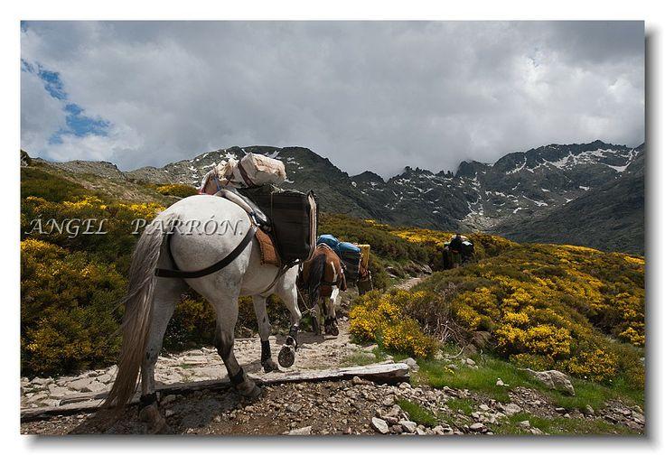 Ruta con caballos