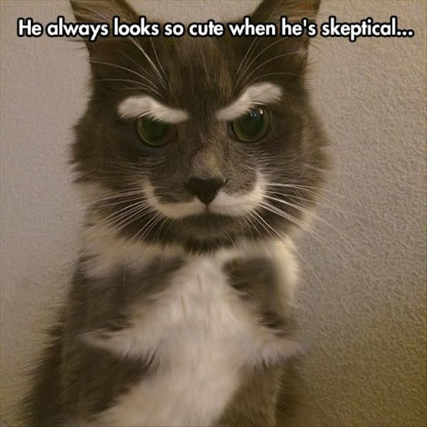 LMAO. This is awesome. Crazy cat markings, even better than the heart shaped ones, lol.