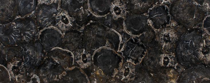 Black Petrified Wood - Antolini