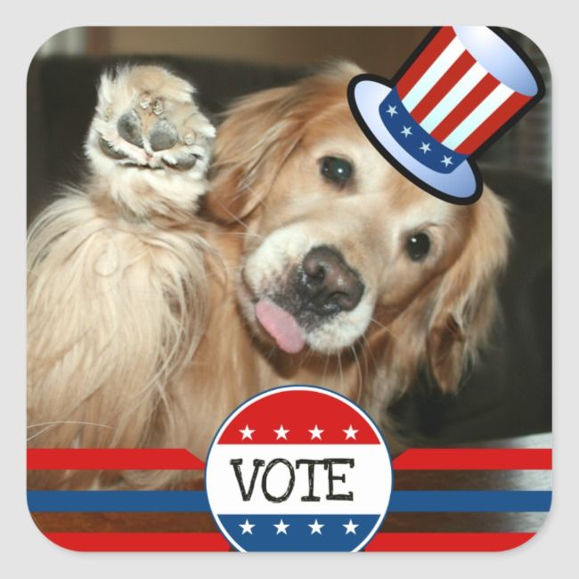 Golden Retriever Vote Stickers Zazzle Com Vote Sticker Dogs
