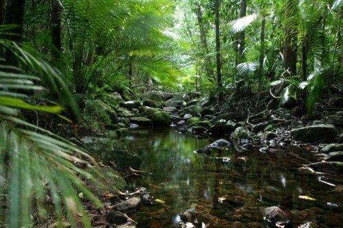 La mitad de los bosques tropicales del mundo tienen difícil mantener su biodiversidad. ecocosas.com