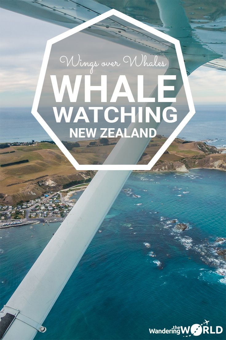 Whale Watching with Wings over Whales Kaikoura, in New Zealand - Wandering the World