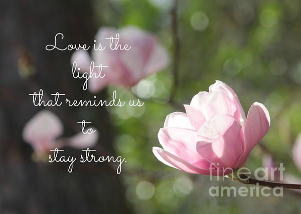 Stay Strong By Carol Groenen Stay Strong Carole Cards