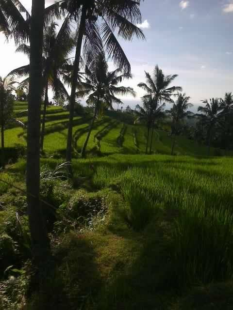 Bali, Buleleng - Panji : Evening day