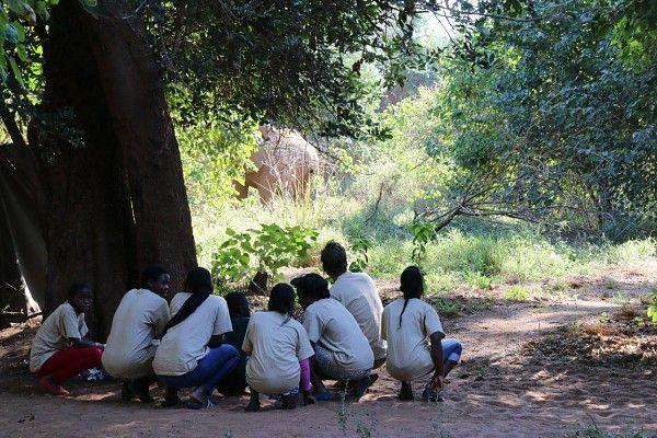 Elephant visits Pafuri Trails camp