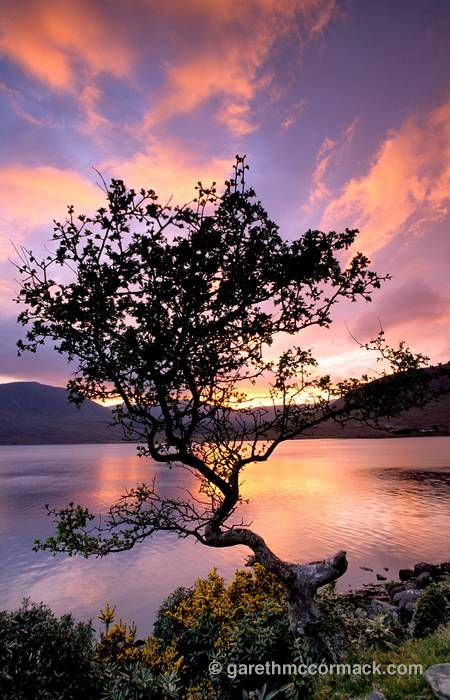 Lough Feeagh and hawthorn tree at sunset, Nephin Beg Mountains, Co Mayo, Ireland. Stock Photo
