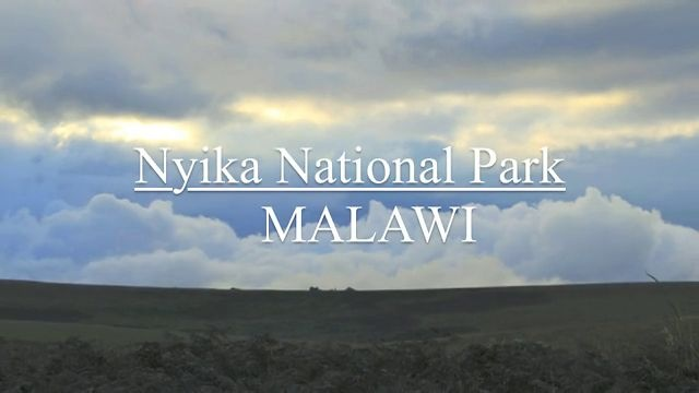 VIDEO: Nyika National Park. Malawi.