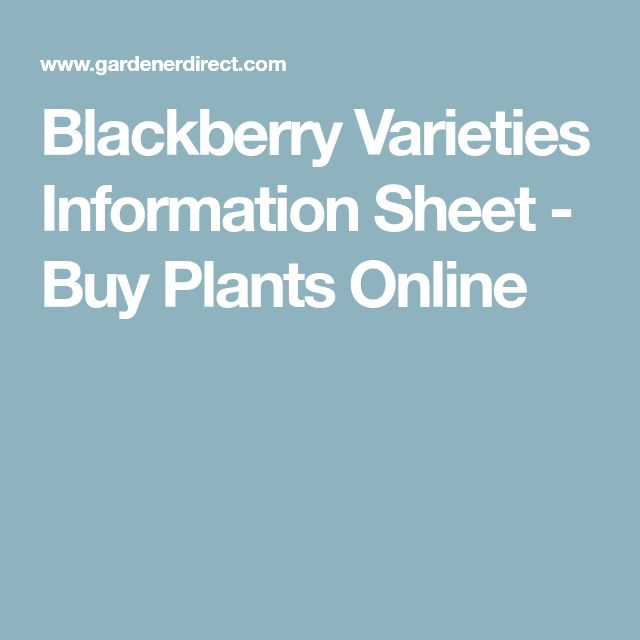 Blackberry Varieties Information Sheet - Buy Plants Online