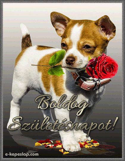 Születésnapi képeslap, kiskutyával és egy szál csillogó rózsával.