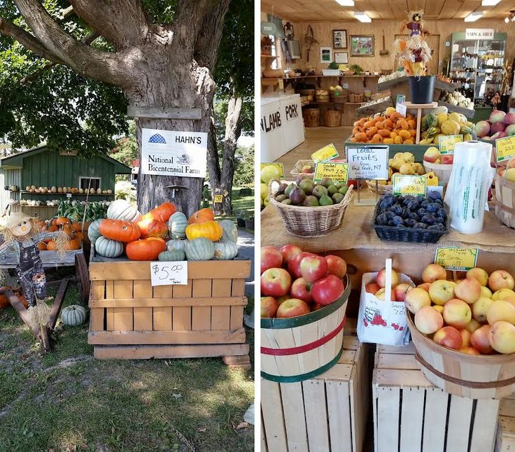 Hahn Farm fall family festival begins 9/20. Weekends only and lots of fun!