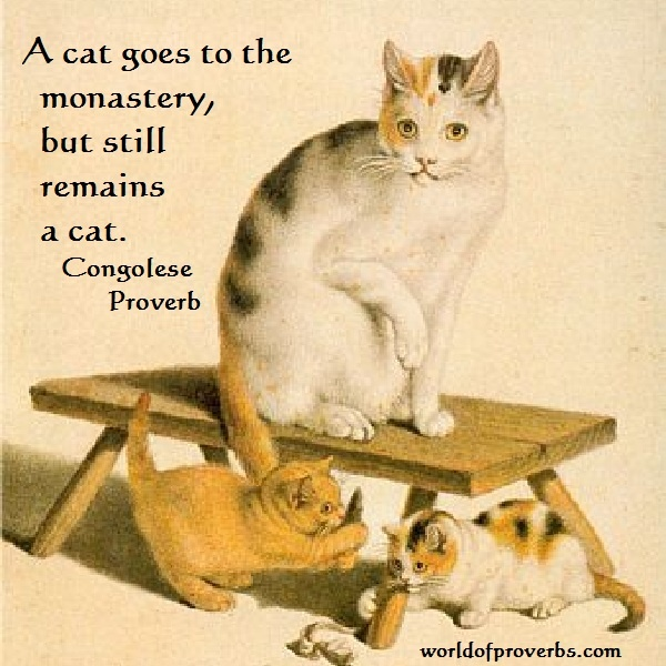Cats Quotes 890 quotes