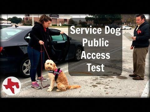 Decent How To Train Your Dog Psychiatric Service Dog Dog