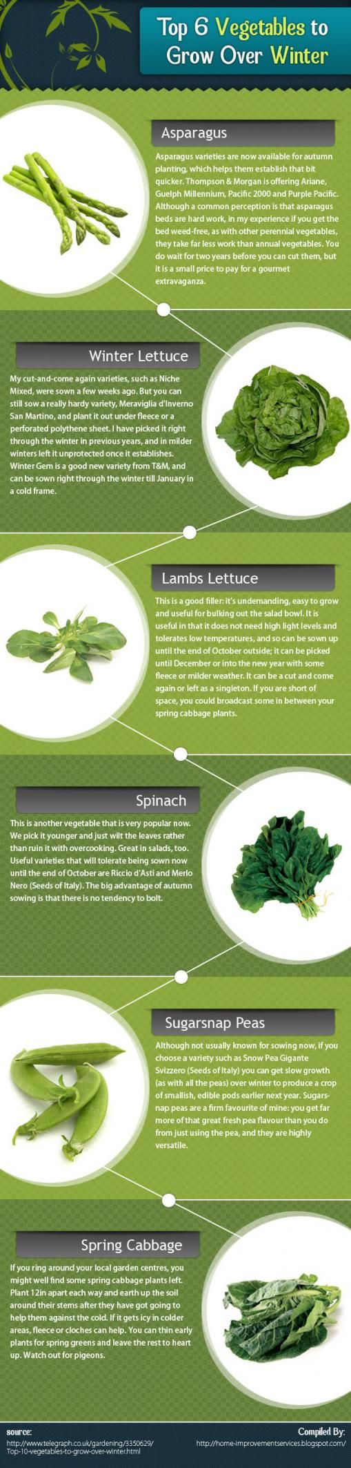 Loveinfographics.com » Submit & share infographics – Infographics Community » Top 6 Vegetables to Grow Over Winter