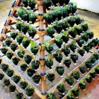 Water geven aan een verticale tuin met irrigatie systeem.
