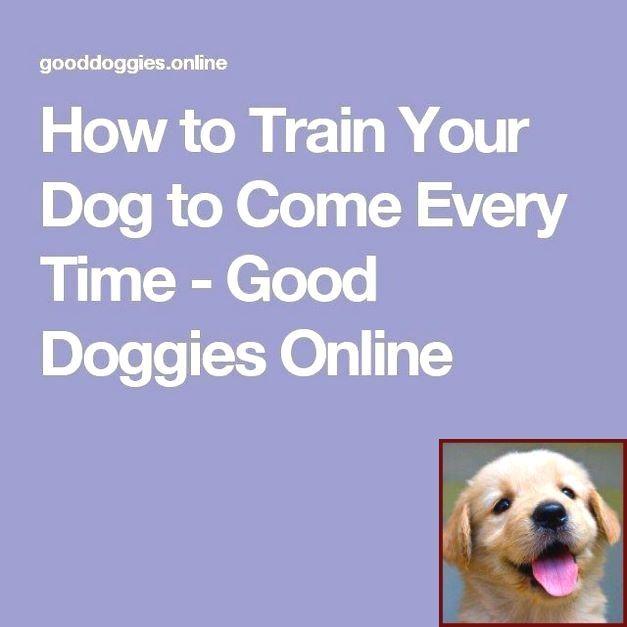 Dog Behavior Expert Near Me And Clicker Training For Dogs Petsmart Dog Clicker Training Puppy Training
