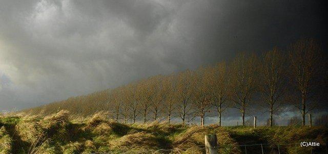 Bomenrij in de herfst - foto Attie Visser
