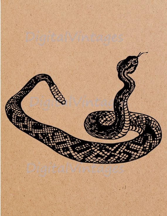 Vintage Rattlesnake Rattle Snake Illustration by DigitalVintages