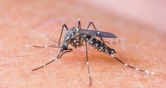 Instan A La Población A Adoptar Medidas Preventivas Ante Inminente Llega Del Zikavirus