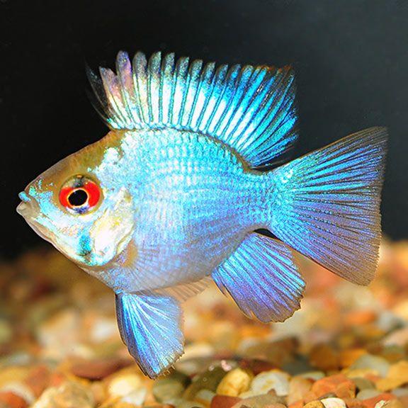Pin On Fish
